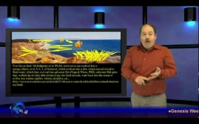 A Fishy Story – Genesis Week, Episode 8