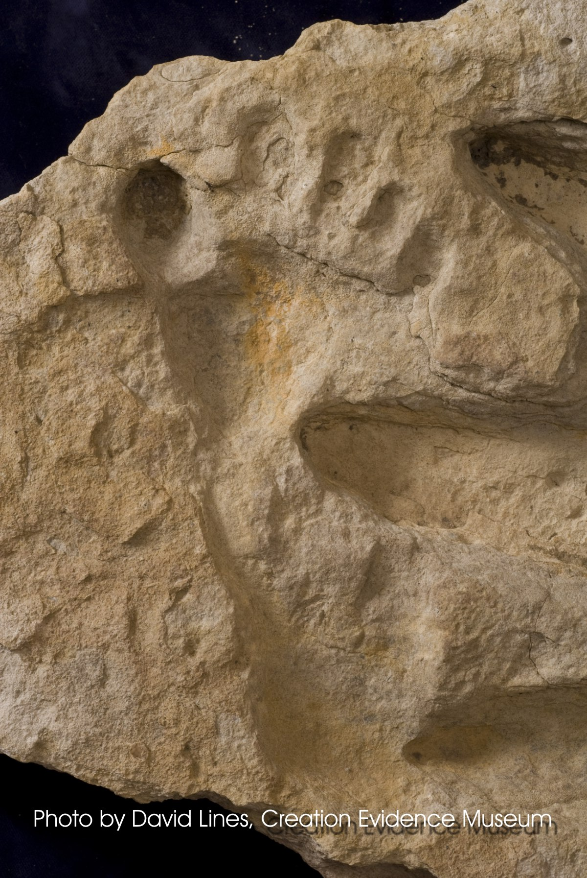 Deep in the Dinosaur Tracks of Texas | Life Traces of the ...  |Paluxy Evidence